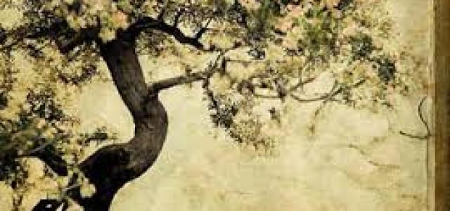 """Libro: Semillas Zen Capítulo:  """"De la Posesión al Poseedor"""""""